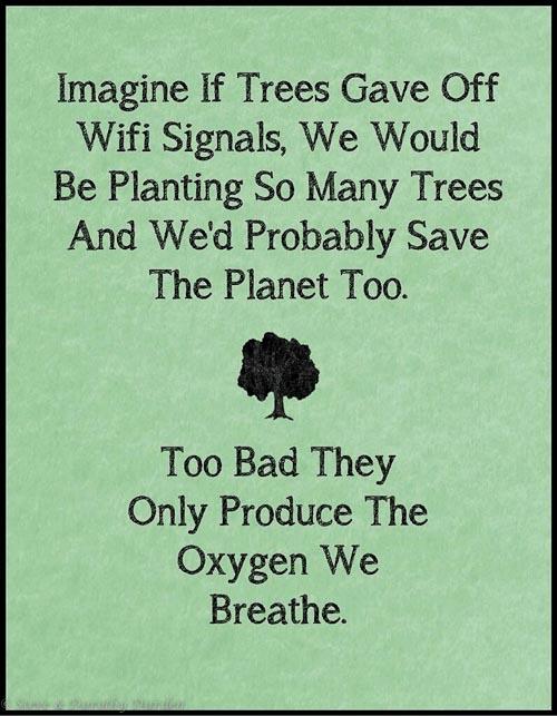 Trees WiFi?